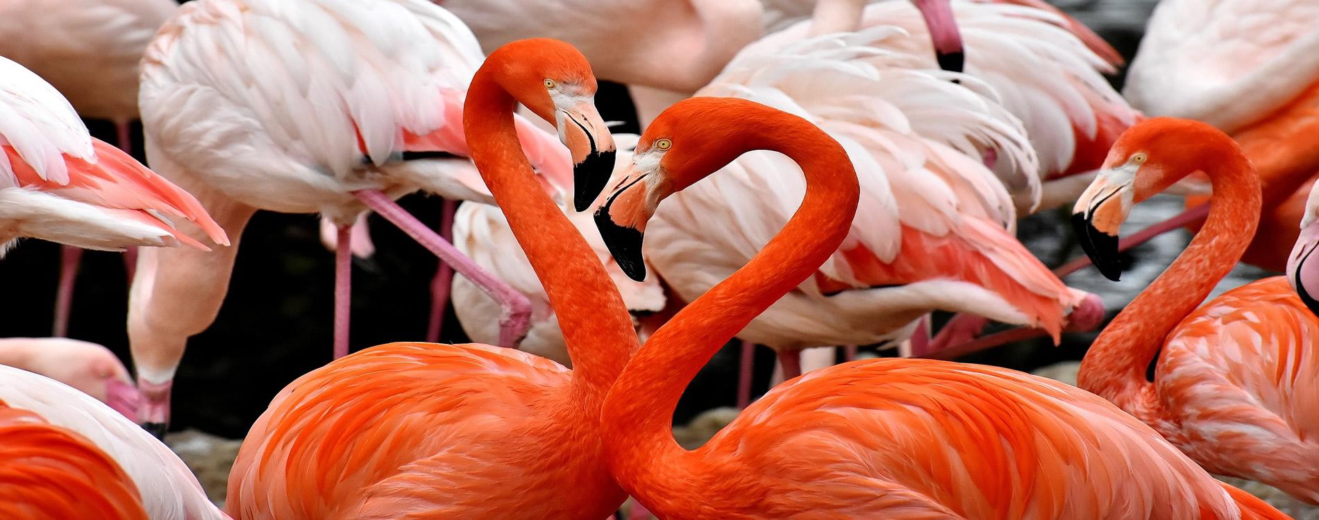 Flamingo_1900x750